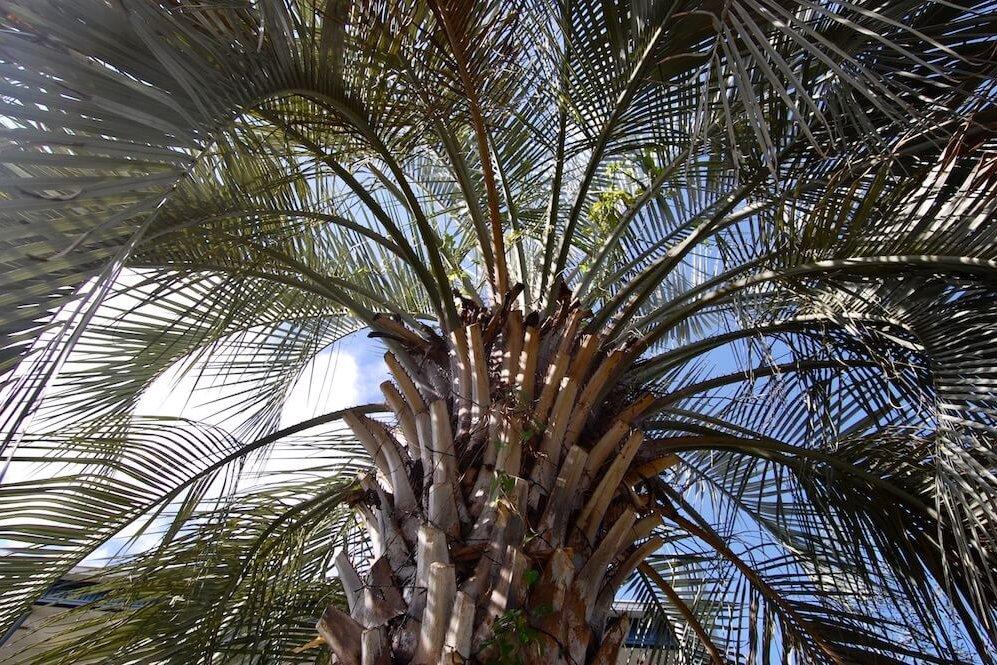 カリフォルニアスタイル西海岸風の家づくり